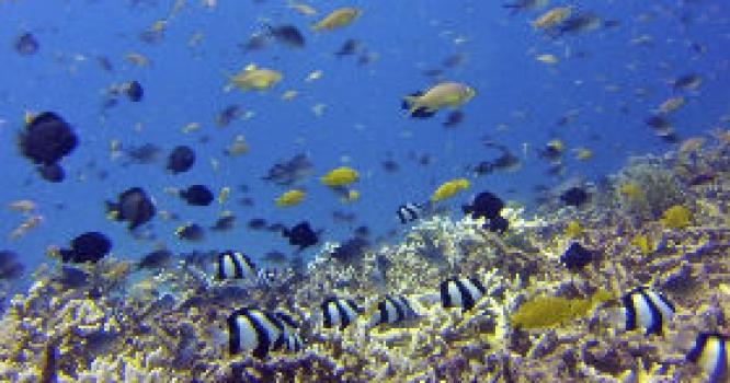 Buceo en el Sudeste Asiático