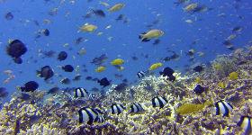 Buceo en el sureste asiatico